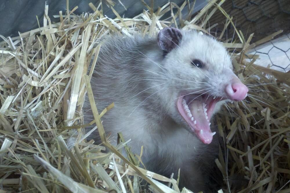 Possum Home