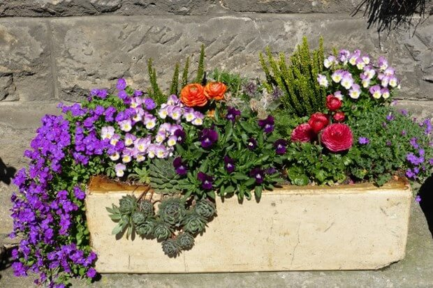 How To Plant & Maintain A Container Garden