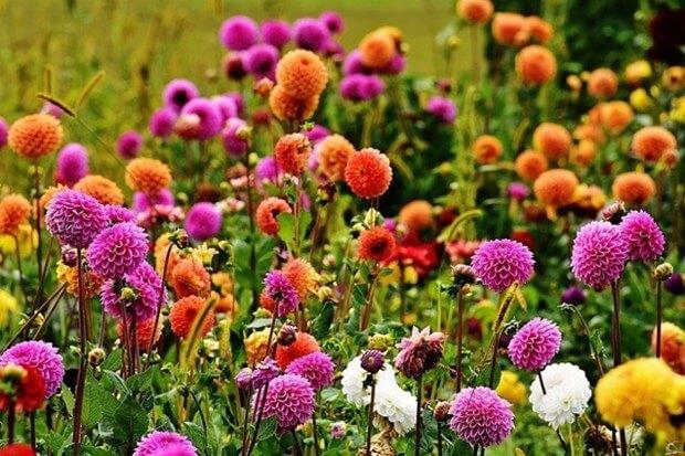 The Guide To Garden Maintenance & Improvement