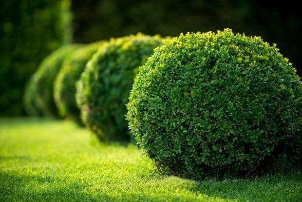 Backyard Plants For Privacy