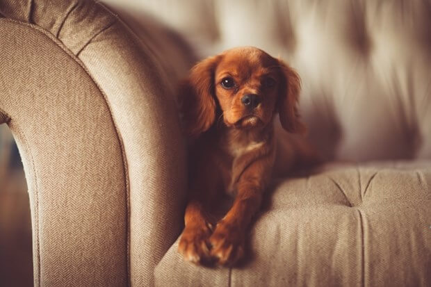 7 Ways To Remove Pet Odors From Your Home