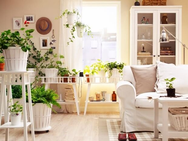 4 Easy To Care For Indoor Houseplants