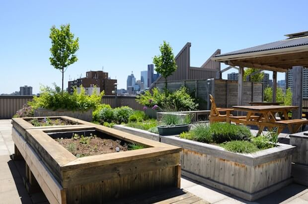 Getting Started On A Rooftop Garden