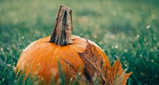 Spice Up Your Fall Home Décor With Pumpkins