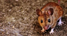 How To Keep Small Rodents Out Of Your Home
