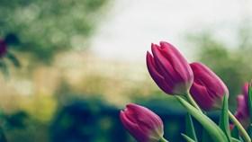 What Flowers Bloom In Spring?