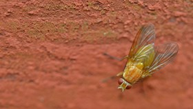 Pest Prevention For Your Home