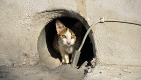 A Homeowner's Guide To Animal Control Problems: What To Do & Who To Call