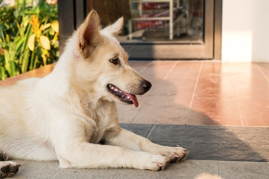 7 Dog Friendly Landscaping Ideas Landscaping For Your Dog