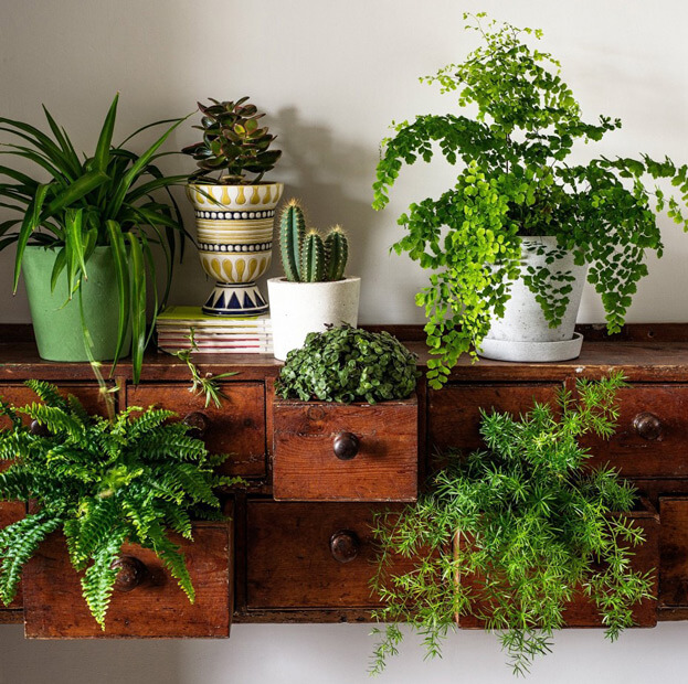 4 easy to care for indoor houseplants easy houseplants for Easy care indoor plants