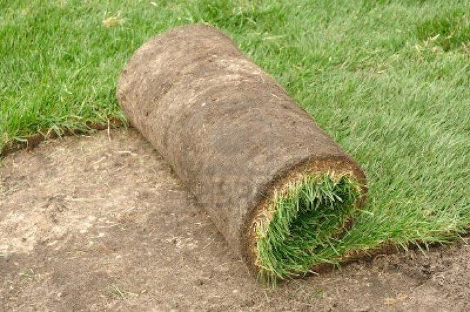 Advantages of St. Augustine Sod