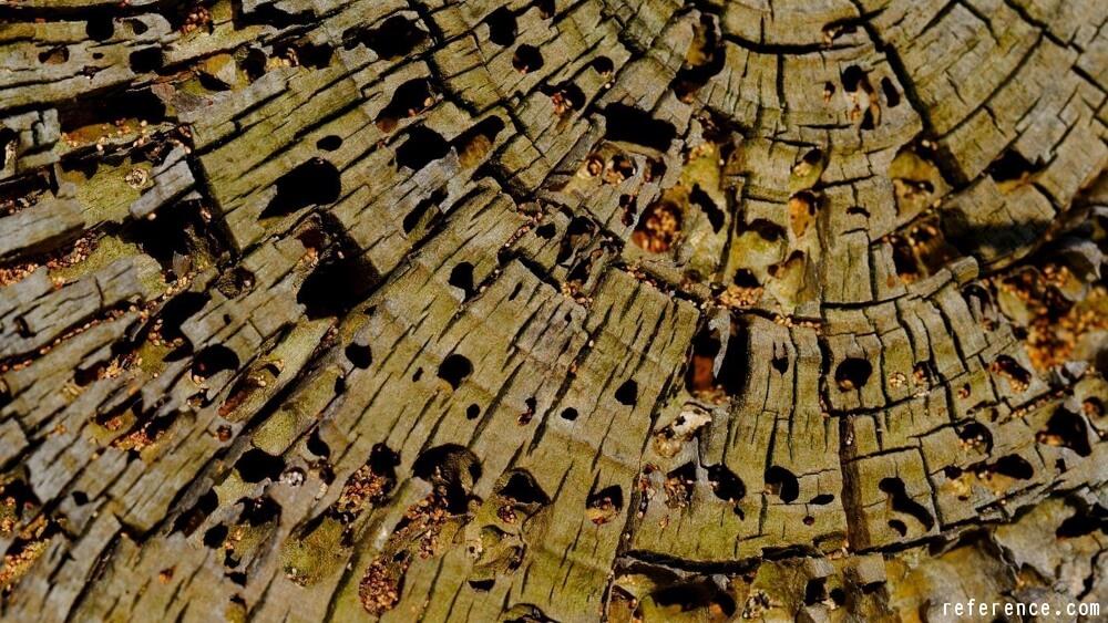 Identifying Tree Rot