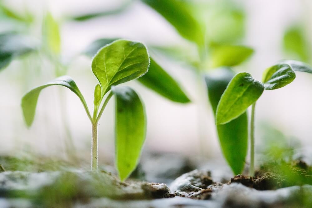 Plant According To Seasonality