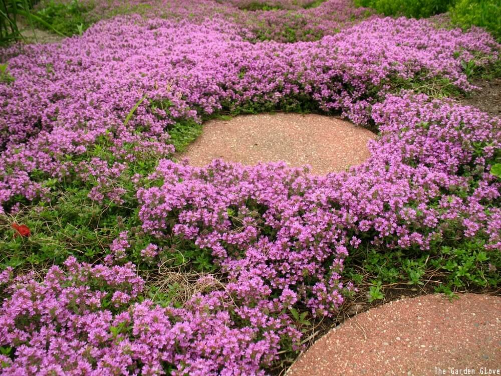 Plant Low Maintenance Ground Cover