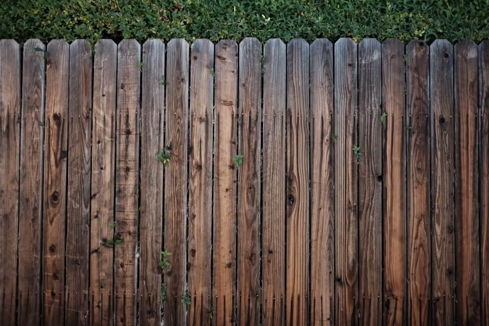 Privacy Plants Vs Privacy Fence