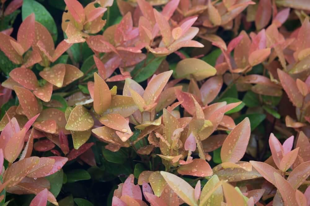 Seasonal Color Trend