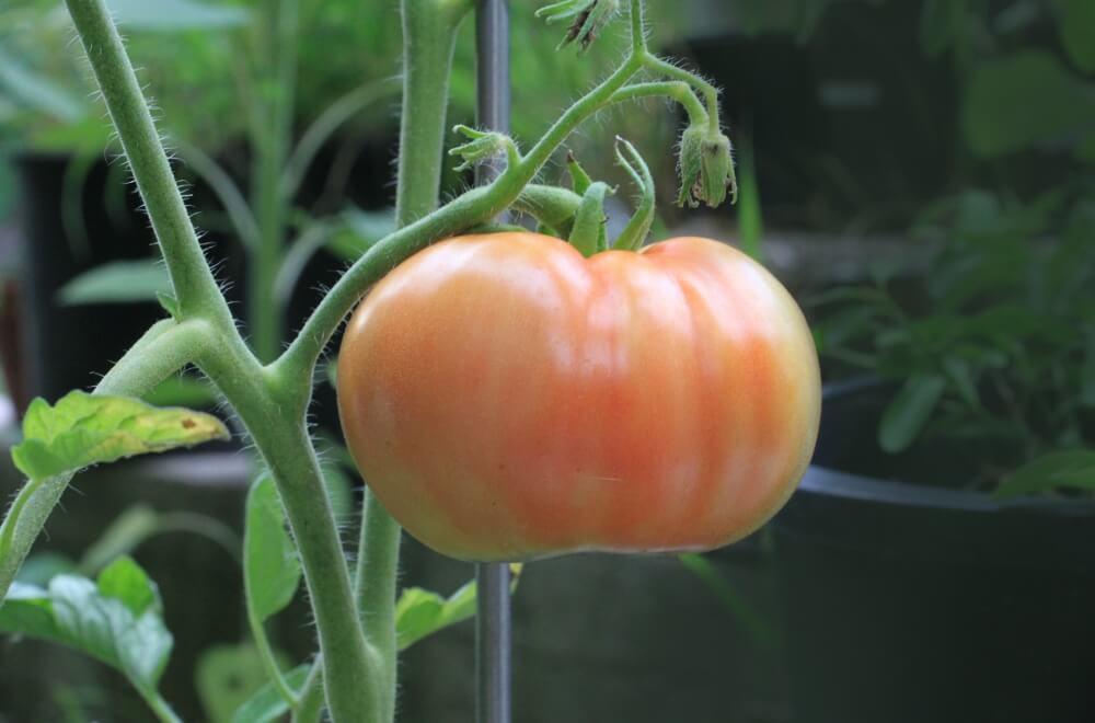 Vegetable Garden Trends