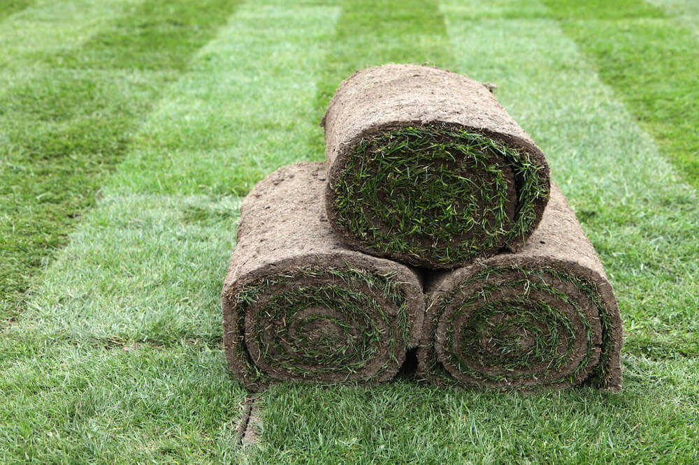 2017 zoysia sod cost zoysia grass sod prices. Black Bedroom Furniture Sets. Home Design Ideas