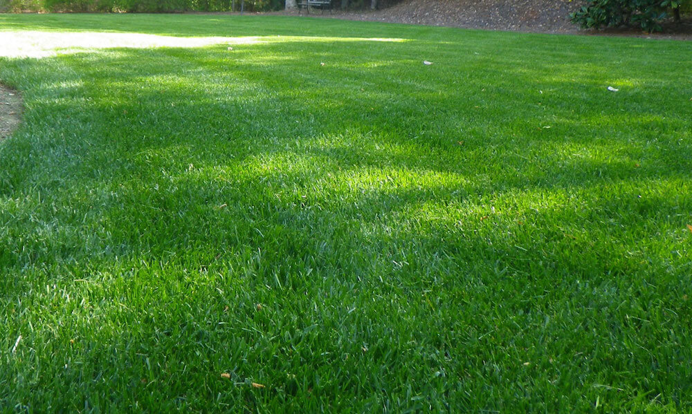 2017 zoysia sod cost zoysia grass sod prices
