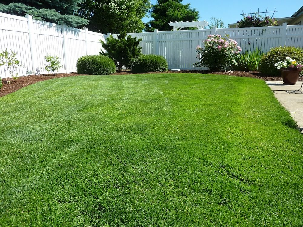 2017 zoysia sod cost zoysia grass sod prices - Grass lawn types make the right choice ...