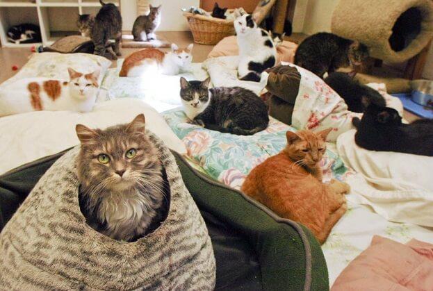 Cat Room 1